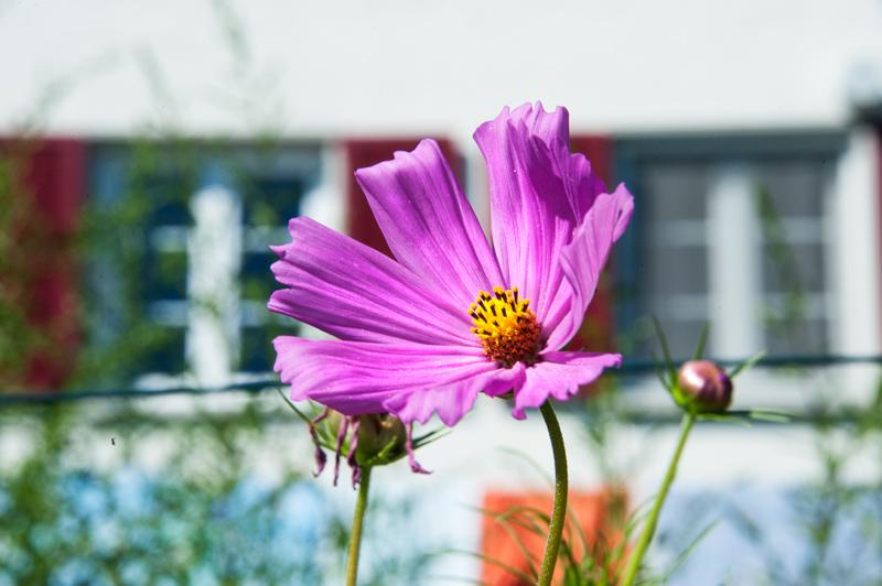 Berghof Hallau Ferienwohnung Blumen