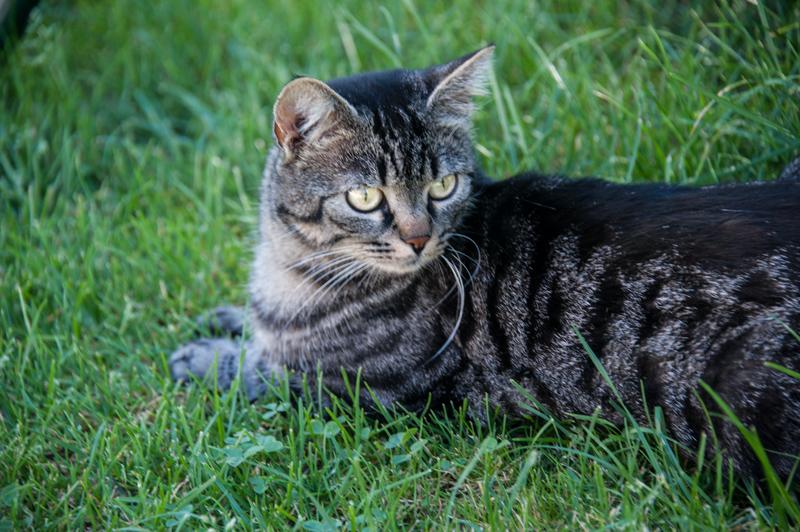 Berghof Hallau Ferienwohnung Katze