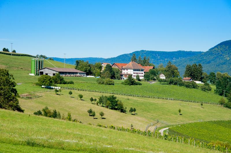 Berghof Hallau Ferienwohnung Aussicht Hallau