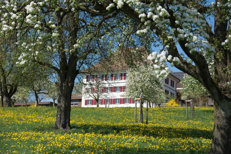 Berghof Hallau Ferienwohnung Garten Obstbäume Blüten