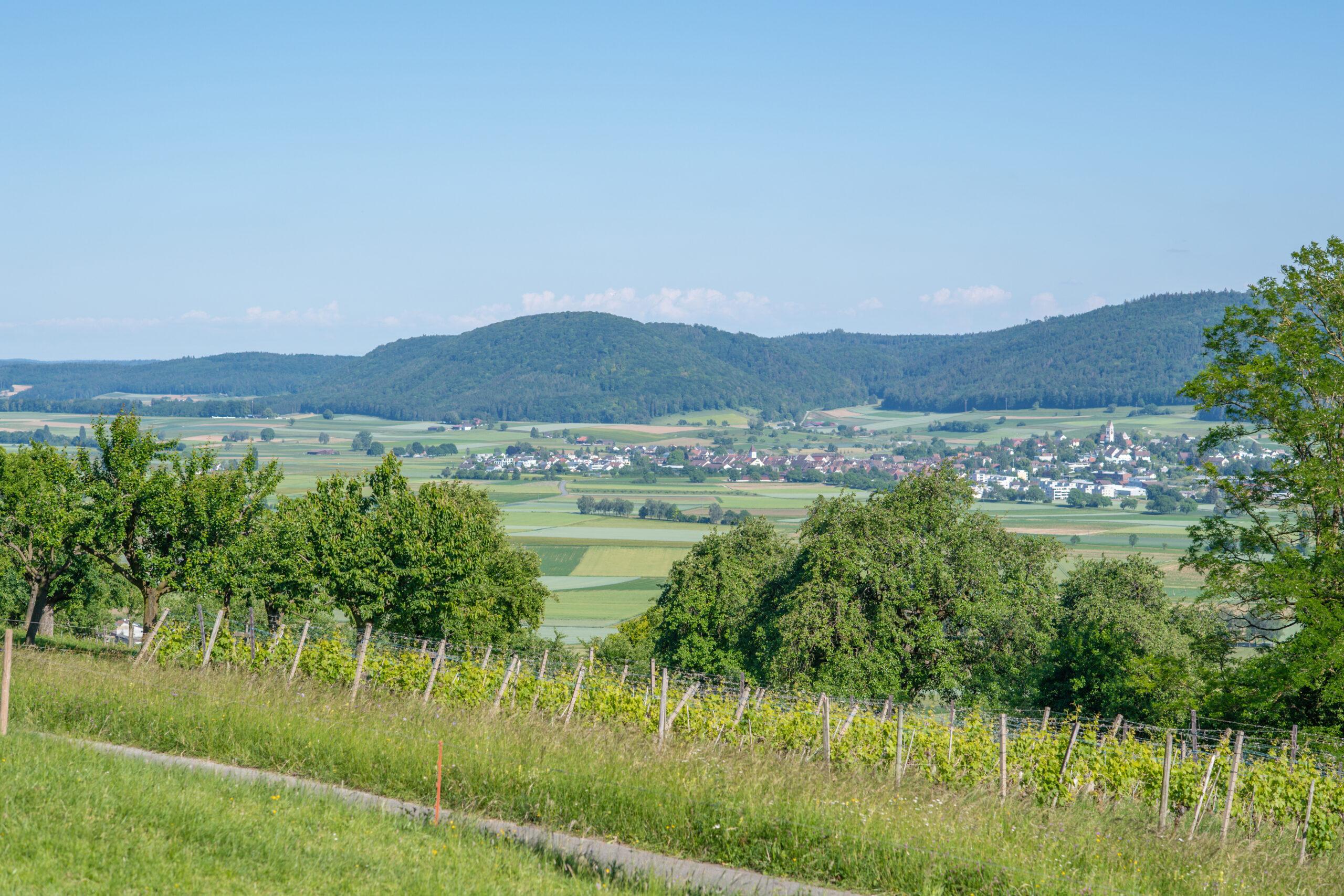 Berghof Hallau Aussicht